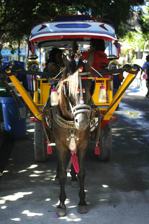 Mule drawn carriages